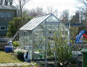 greenhouse plants when to plant