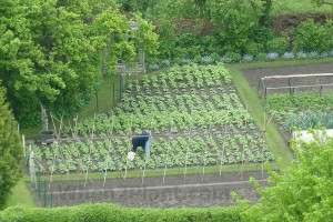 vegetable allotment garden when to plant vegetables