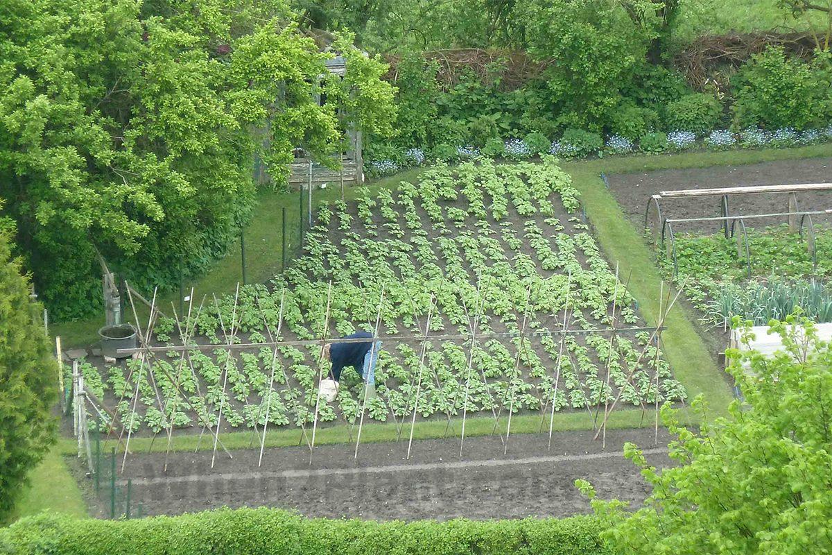 Vegetable Allotment Garden When To Plant Vegetables